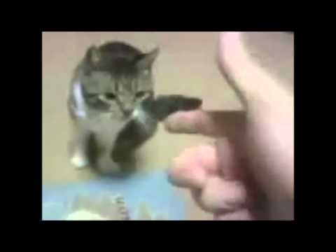 animali che fingono di morire - divertentissimo