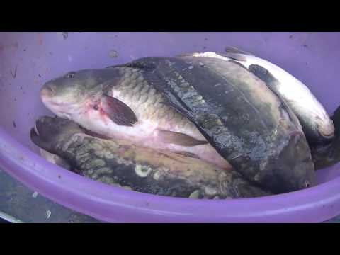 Видео отчет о рыбалке за 25 мая 2019