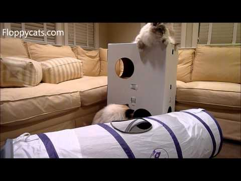 Pets Can Play Ultimate Cat Tunnel Product Review – ねこ – ラグドール – Floppycats