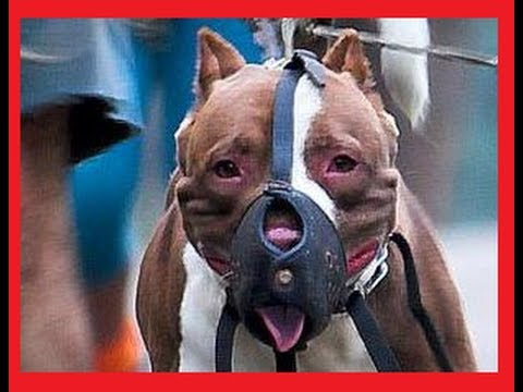 DOG FIGHT► THE REAL TOP 10◄ Worldwide!