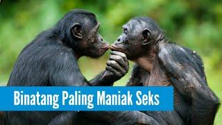 Download Video 7 Binatang Paling Maniak S3ks Di Dunia MP3 3GP MP4