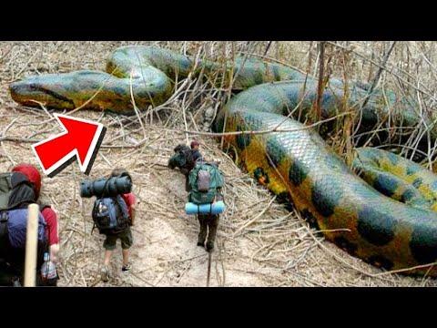 결국 10M 짜리 뱀이 발견되버렸다