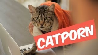 Video CATPORN - MANU MAIS PAS TROP MP3, 3GP, MP4, WEBM, AVI, FLV Juni 2017