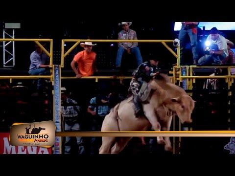 Waguinho Animal - Final touro em Riolândia 06/08/16