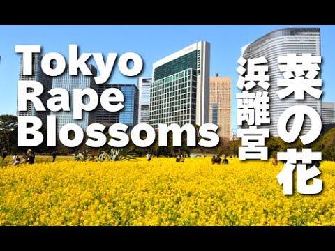 旅レポ【東京都】花で巡る東京!