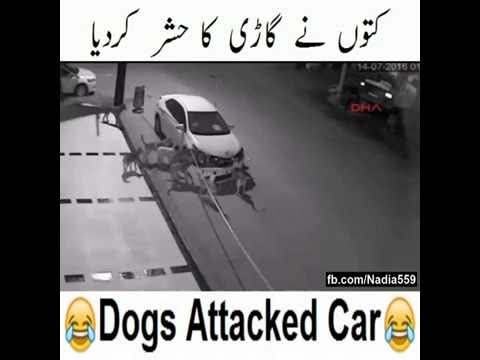 Car torn apart by Dogs