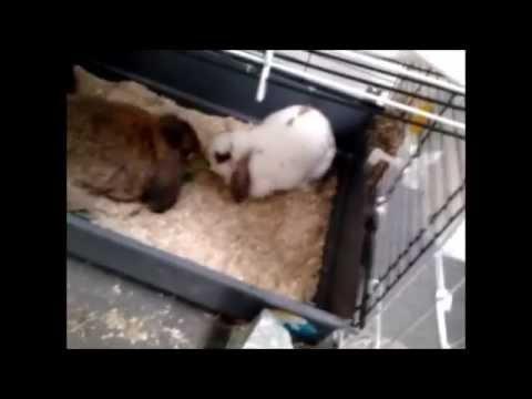 Vrolijke konijnen