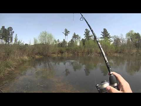 Spring Largemouth Bass Sight Fishing in Crystal Clear Water!