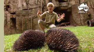 Nonton Robert Irwin's Australia Zoo tour Film Subtitle Indonesia Streaming Movie Download