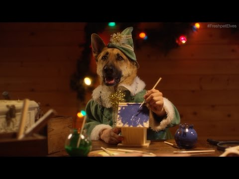 Dogs And Cats Prepare For Christmas