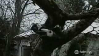 America's Funniest Home Videos - Nhung Clip hai hay nhat - tap 45
