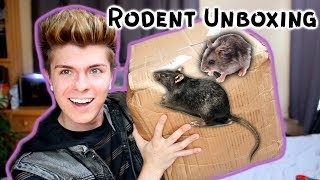 Unboxing Feeder Rodents! (snake food) by Tyler Rugge