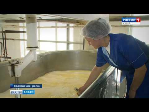 Автопробег «Дорогу молоку» по Алтаю завершится в колледже сыроделия в Алтайском районе