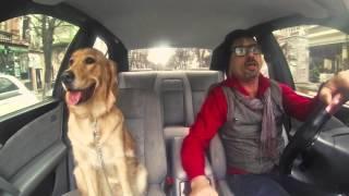 Taksisti - 01 Qeni
