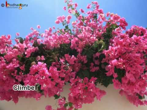 Science - Different Types of Plants -  Herb, Shrub, Tree, Climber & Creeper - Overview English