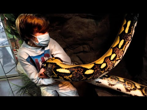 12 YEAR OLD SNEAKS INTO MY 20 FOOT SNAKES CAGE!!! | BRIAN BARCZYK