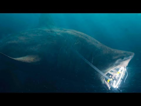 Ozzy Man Reviews: THE MEG Exclusive Clip