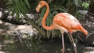Vidéo tournée au zoo de Martinique au cœur de l'Habitation Latouche. Juillet 2017. Musiques : Uplifting and Inspiring...