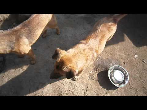 BRUCE ( 07-02-2016 ) - Tierhilfe - Korfu