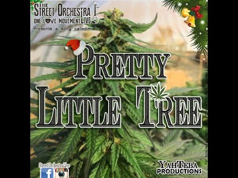 Street Orchestra Live - Pretty Little Tree (December 2015)