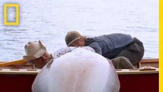 Idiota znalazł niezawodny sposób, żeby zabić ogromną rybę na łódce!