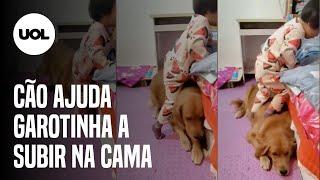 Vídeo de cão ajudando criança a subir na cama viraliza na web