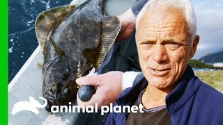 Have The Giant Halibut Disappeared From Alaskan Waters?   Jeremy Wade's Dark Waters by Animal Planet