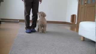 Dog Training 8