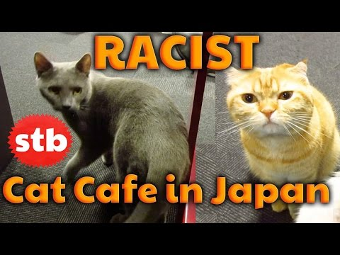 Racist Cat Cafe in Tokyo