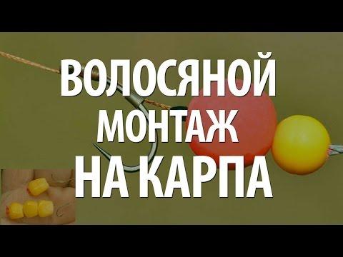 ловля толстолоба в мае в белгороде