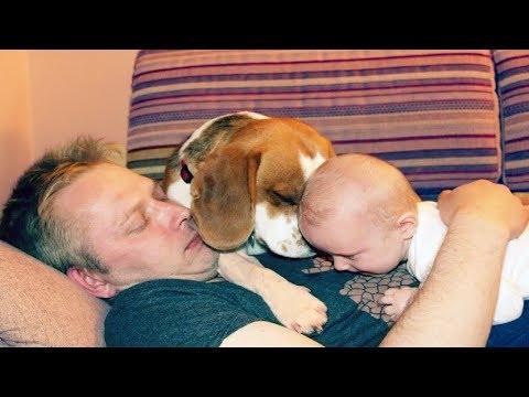 beagle love baby