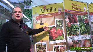 #222 Pointilla one of the new varieties 2014