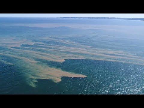 Gefährlicher Blaualgenteppich treibt Richtung deutscher Küste
