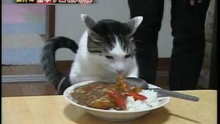 Кошка прется от соуса карри