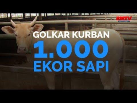 Golkar Kurban 1.000 Ekor Sapi