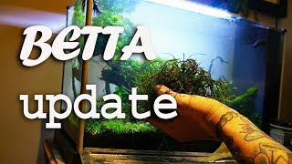 MASSIVE hack to the Betta tank- TPWM by Rachel O'Leary