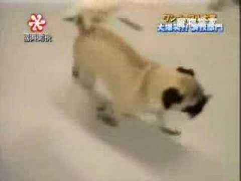 El Perro ladron | Lentillas raras | Despedida de solteras