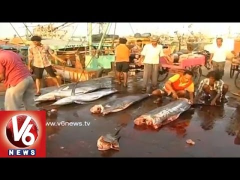 Huge Demand for Visakhapatnam Tuna Fish in Japan and Singapore