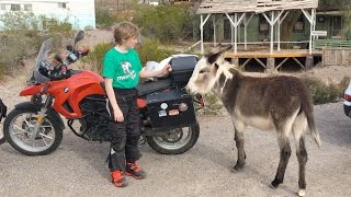 An afternoon ride up Route 66 in Arizona from Topock, through Oatman and ending at Cool Springs Station museum. The not-so-wild burros in Oatman and the twisty roads are a highlight of the trip.