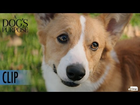 A Dog's Purpose (Clip 'Maya Tries to get Tino to Chase a Ball')