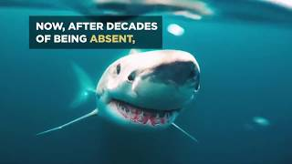 Phelps Vs. Shark: Making Michael Faster SHARK WEEKShare Tweet Phelps Vs. Shark: Making Michael Faster The scientists...