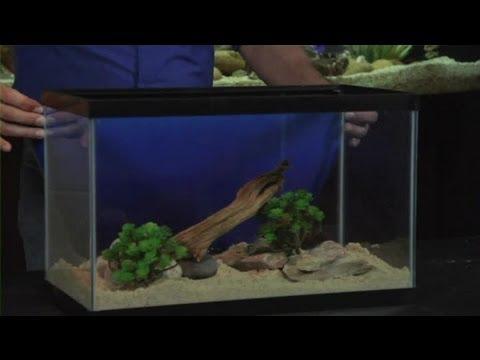 Setting Up a 10-Gallon Aquarium : Aquariums & Fish Tanks