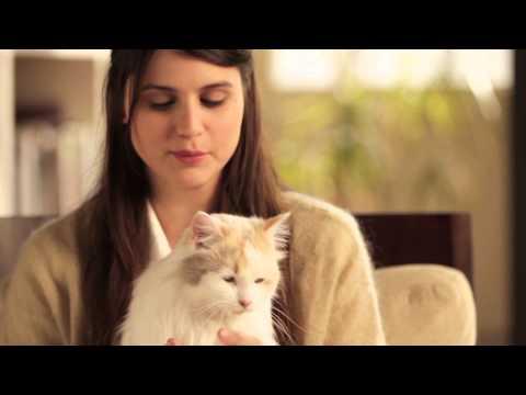 ¿Eres un experto en gatos? Únete a Purina One