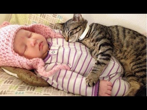 Funny cat videos - BEST VIDEOS Of Cats Love Babies Compilation  CUTE And FUNNY