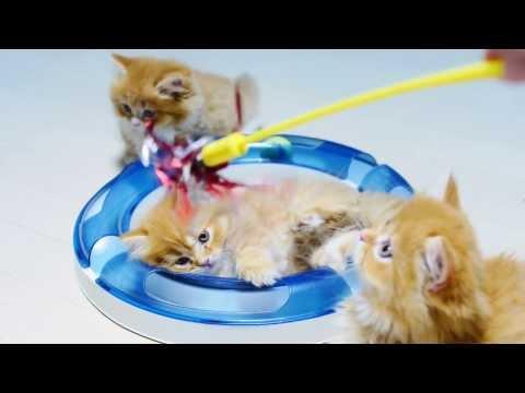 小萌貓瘋玩軌道球