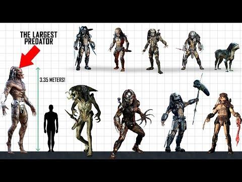 PREDATOR Size Comparison