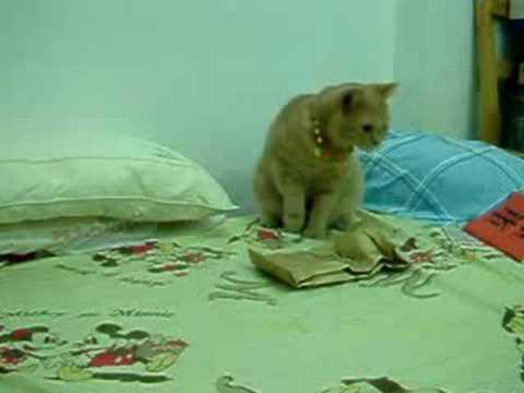 「[ネコ]JAM Projectのゲームソング「GONG」にマッチし過ぎの神編集なネコ動画。」のイメージ