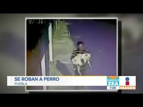 ¡Ni las mascotas se salvan! Se roban a perro en Puebla