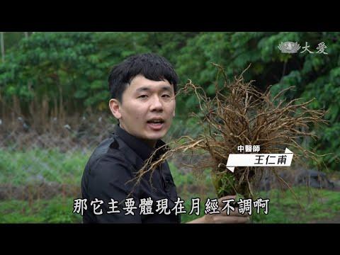 【中醫出任務─藥草小學堂─王仁甫中醫師】20200906當歸