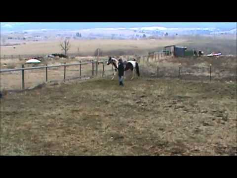 Building Your Horse's Confidence